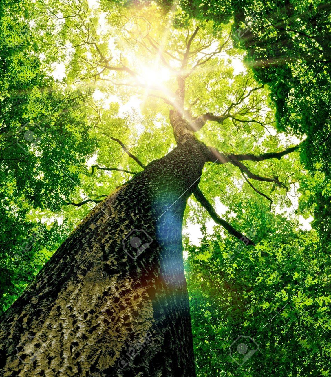 arbres de la foret nature vert bois lumiere du soleil fond