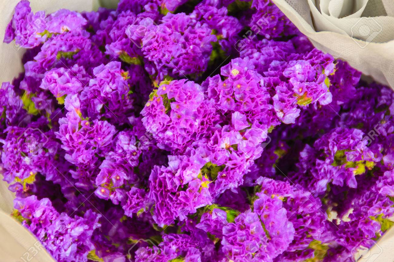 Purple Statice Flowers For Sale In The Flower Market  Bangkok     Purple statice flowers for sale in the flower market  Bangkok  Thailand   Stock Photo