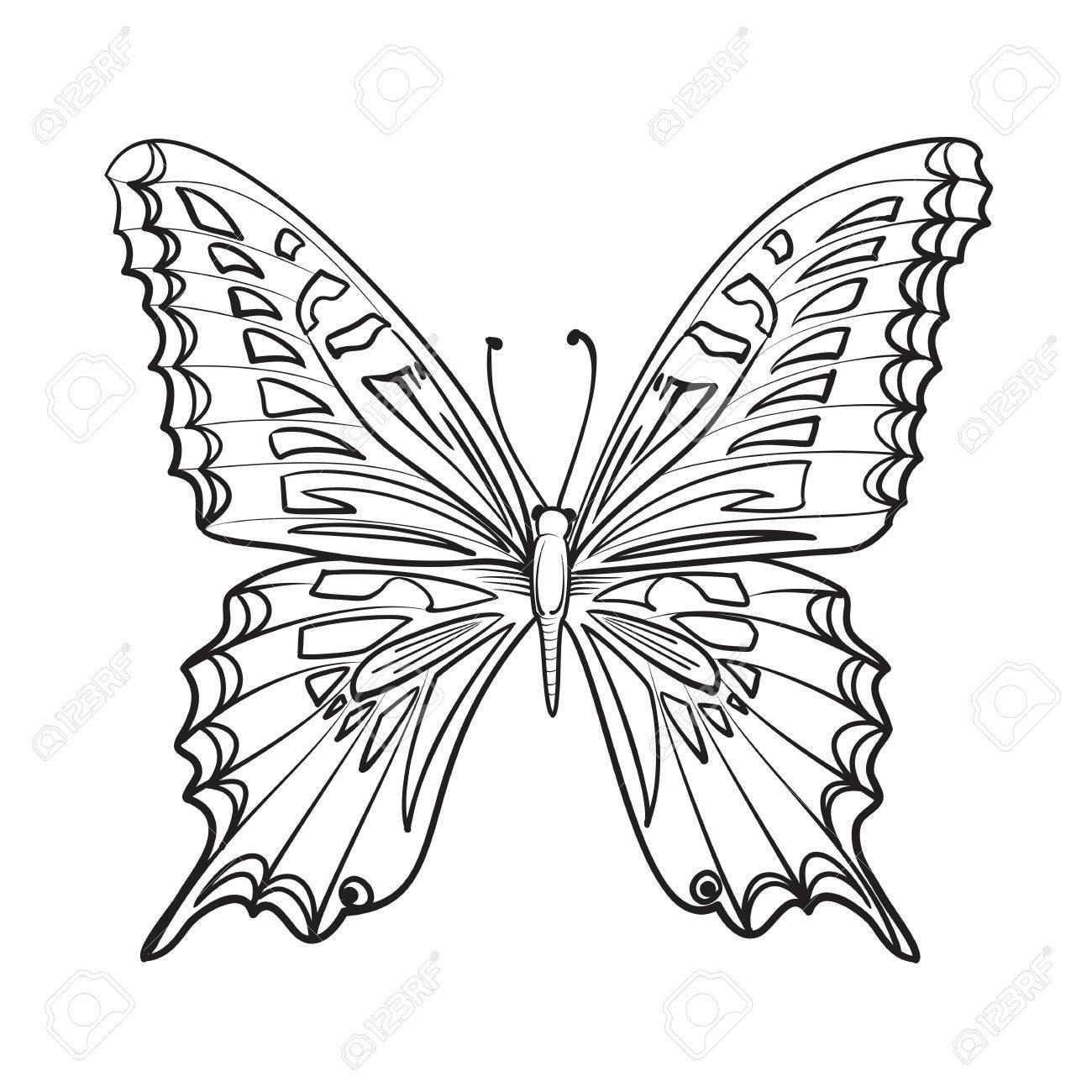 carte flying papillon beau papillon noir et blanc isole sur blanc