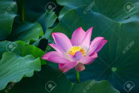 Symbolic flowers in buddhism flower shop near me flower shop symbols in buddhism the lotus flower buddhist symbols lotus flower google search buddhism pinterest buddhist symbols lotus flower google search buddhist mightylinksfo