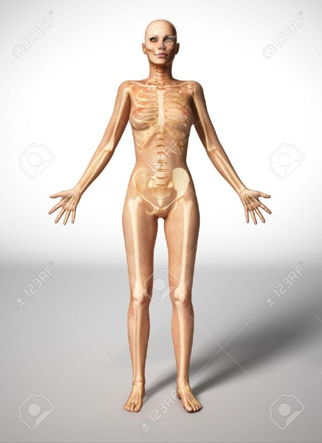 Naked Woman Standing On Floor With Bone Skeleton Superimposed Stock Photo 11713076
