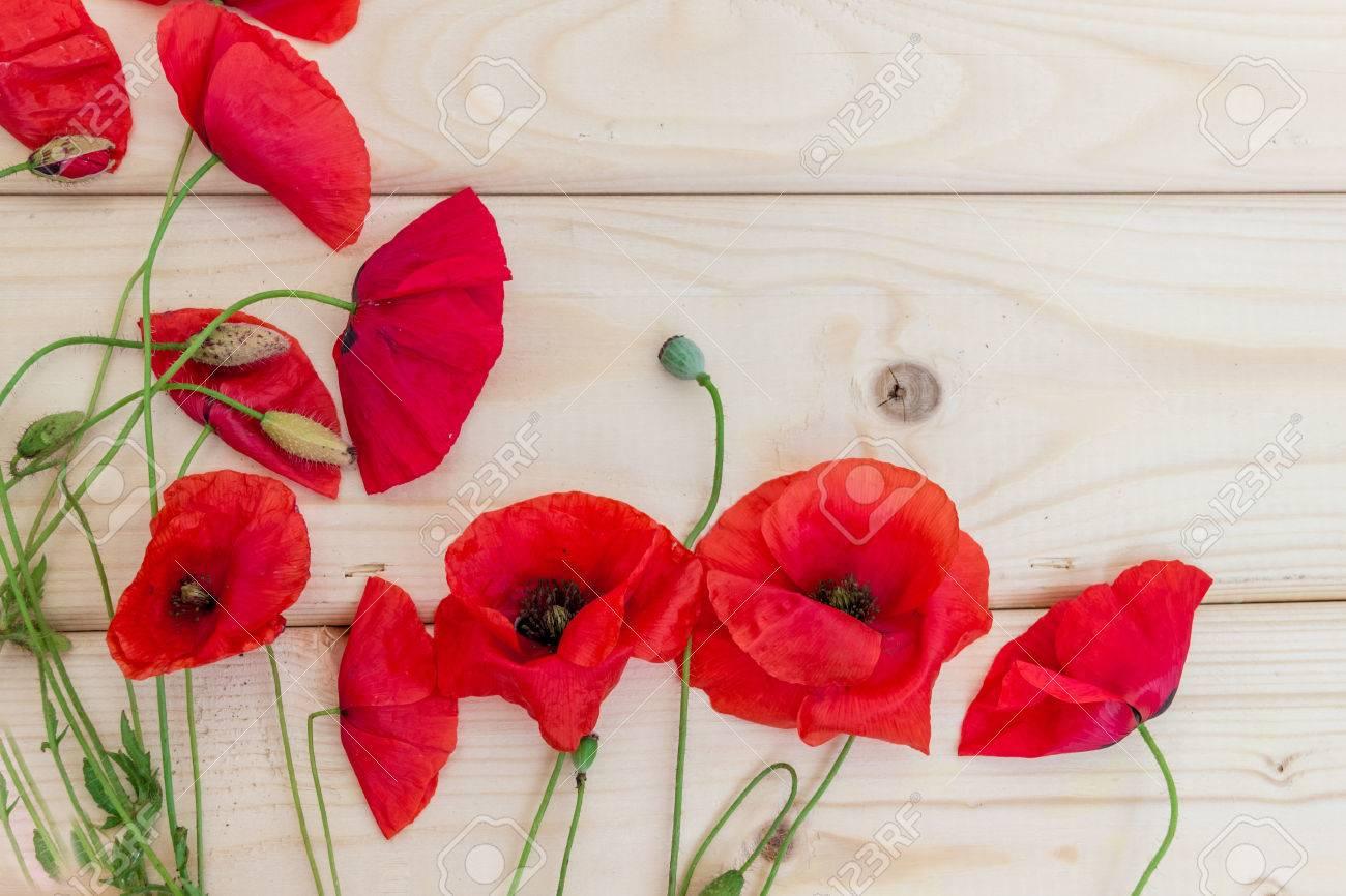 flocons de coquelicots sauvages sur un fond en bois clair fond d ecran economiseur d ecran arriere plan fleurs de printemps medicaments naturels