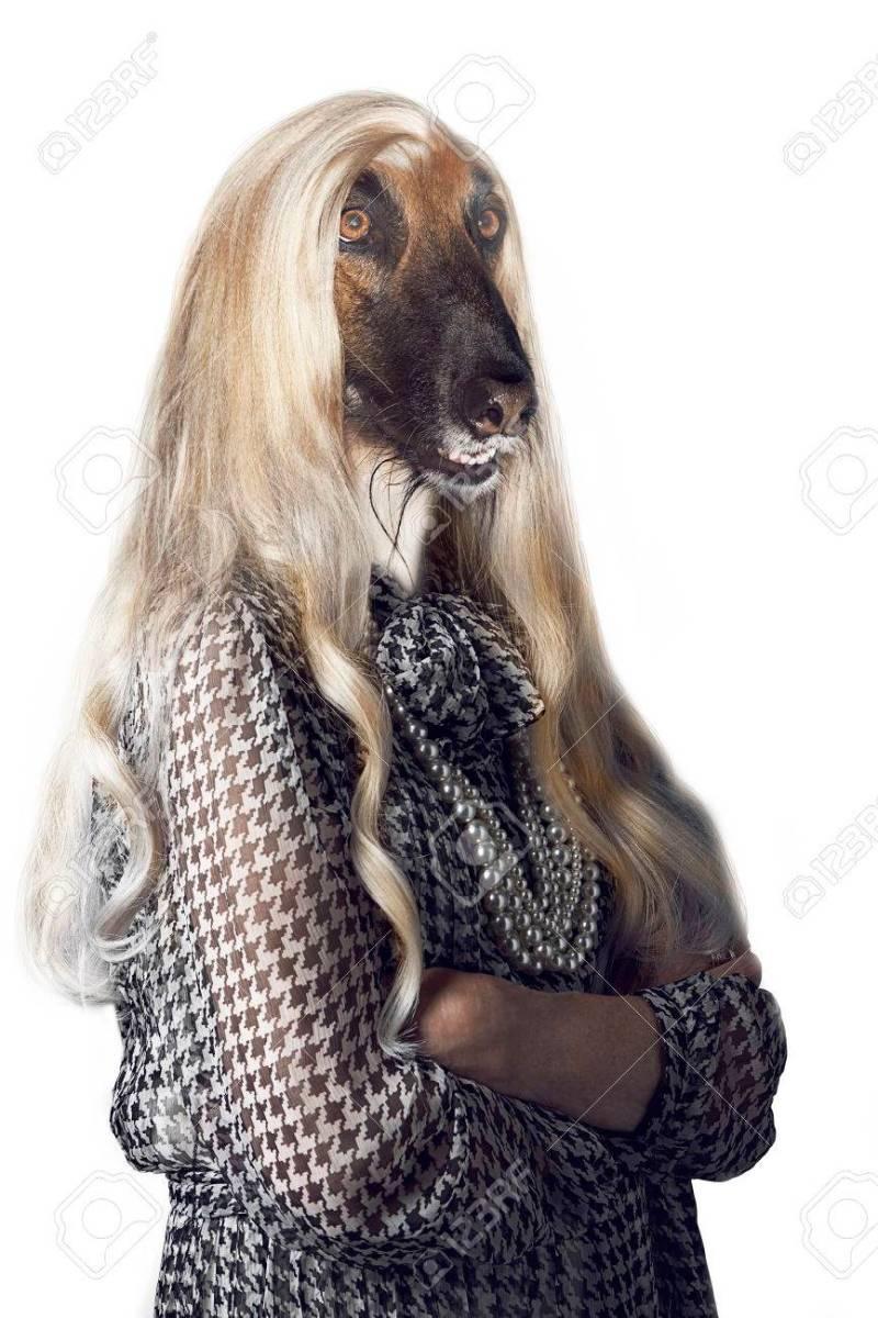 Flagrant Long Hair On Ir Ears Head Long Hair Tails Dogs Head