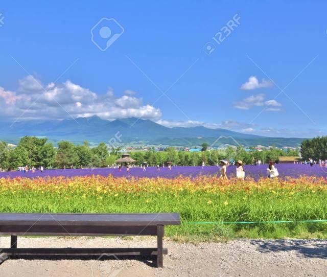 Hokkaido Japan July 23 The Wooden Bench In Front Of Rainbow Flower Field