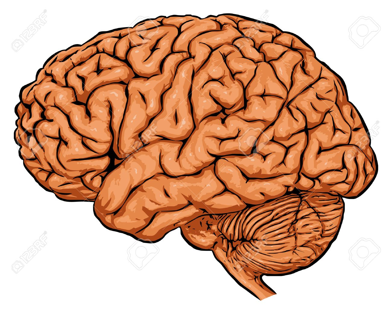 Image result for clipart the brain