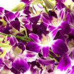 Purple Orchids Bouquet On White Background Stock Photo Picture And Royalty Free Image Image 16721143