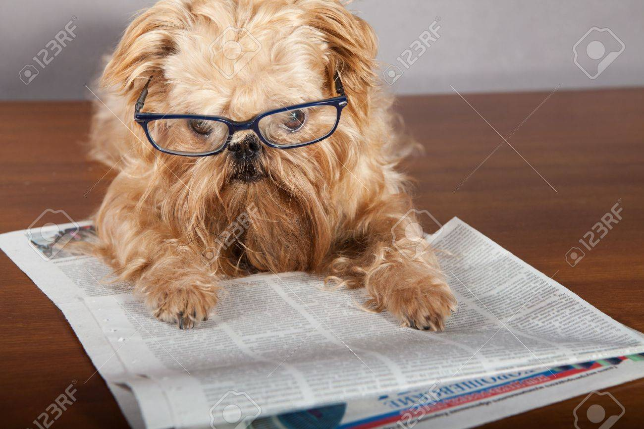 serious dog in glasses reading the newspaper stock photo, picture
