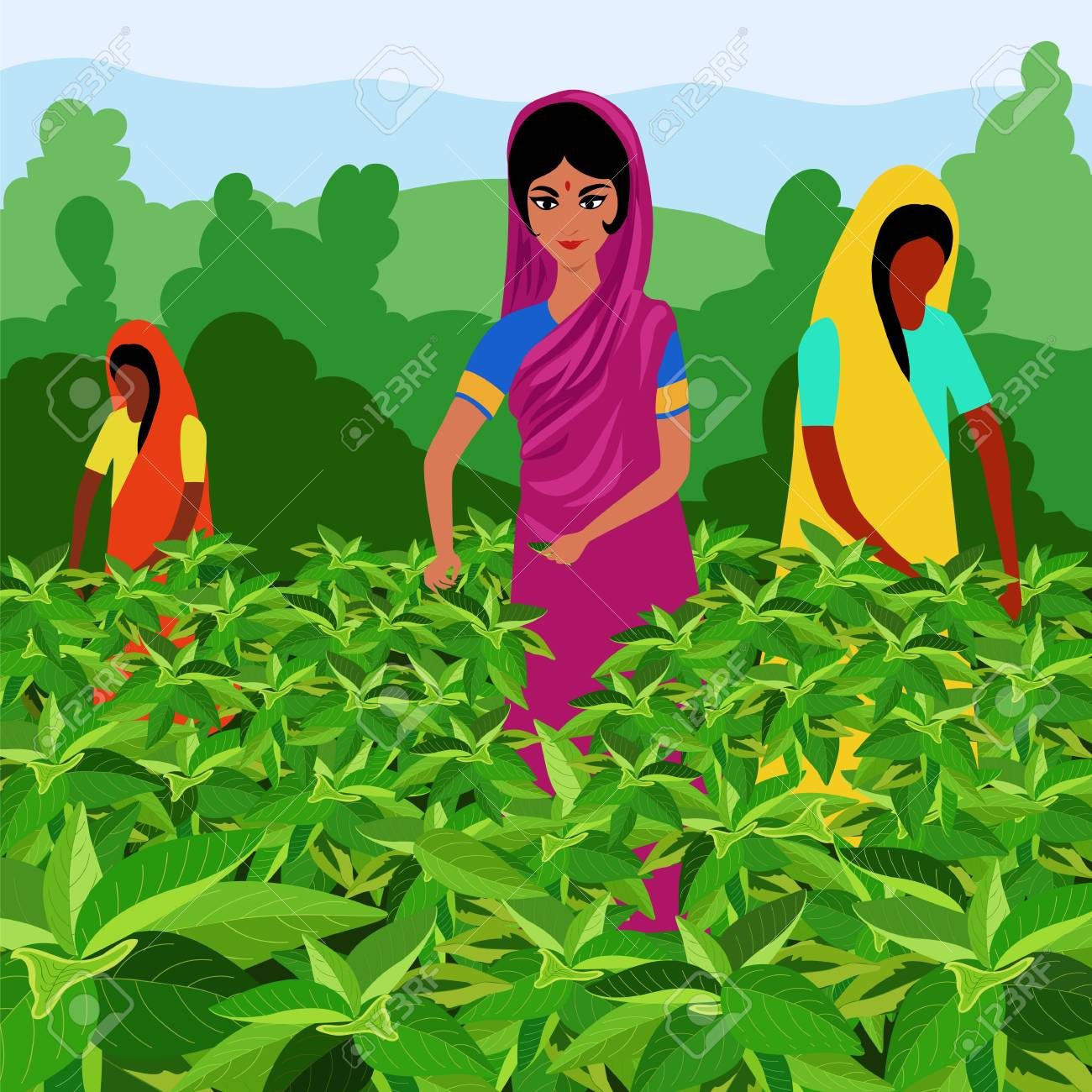 Indian Women Tea Pickers Royalty Free Cliparts Vectors And Stock Illustration Image 99701554