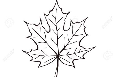 Silver Maple Sugar Red Leaf Drawing Png Young Tree Silhouette