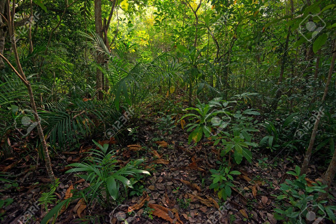 Protect your plants with onsite materials. Scenic View Of Beautiful African Jungle With Lush Foliage Stock Photo Picture And Royalty Free Image Image 37002994