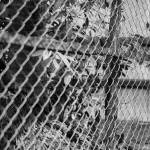 Black And White Photo Of Chain Link Fence Also Referred To As Stock Photo Picture And Royalty Free Image Image 77236830