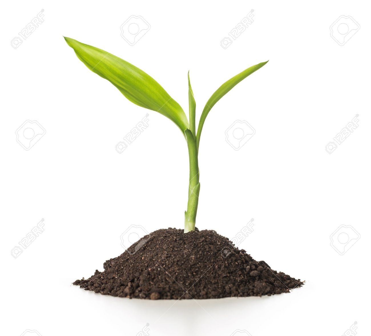 Image result for small plant
