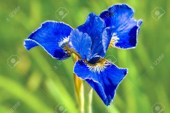 BLUE IRIS CRACK 5.4.9.18 {100% WORKING} Free Download