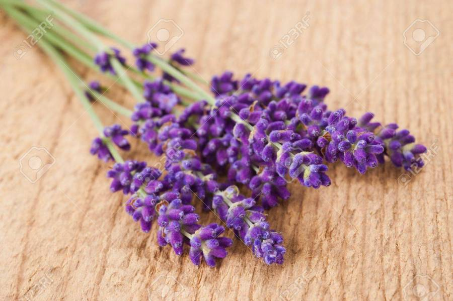 Lavender Flowers On Wood Background Stock Photo  Picture And Royalty     lavender flowers on wood background Stock Photo   21260630