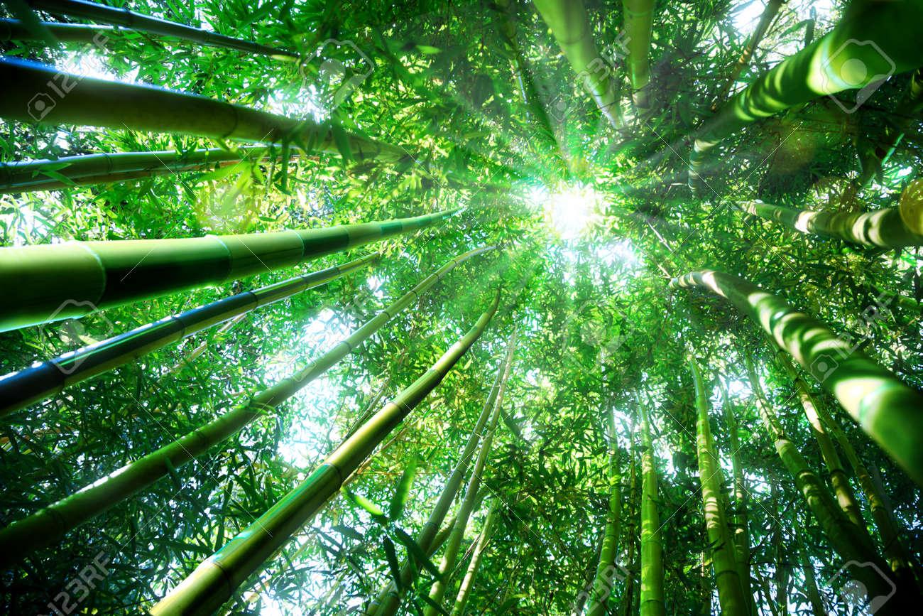 Foret De Bambous Notion Zen Banque D Images Et Photos Libres De Droits Image 33104605