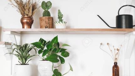 Stylish Green Plants Black Watering Can Boho Wildflowers On Stock Photo Picture And Royalty Free Image Image 119619396