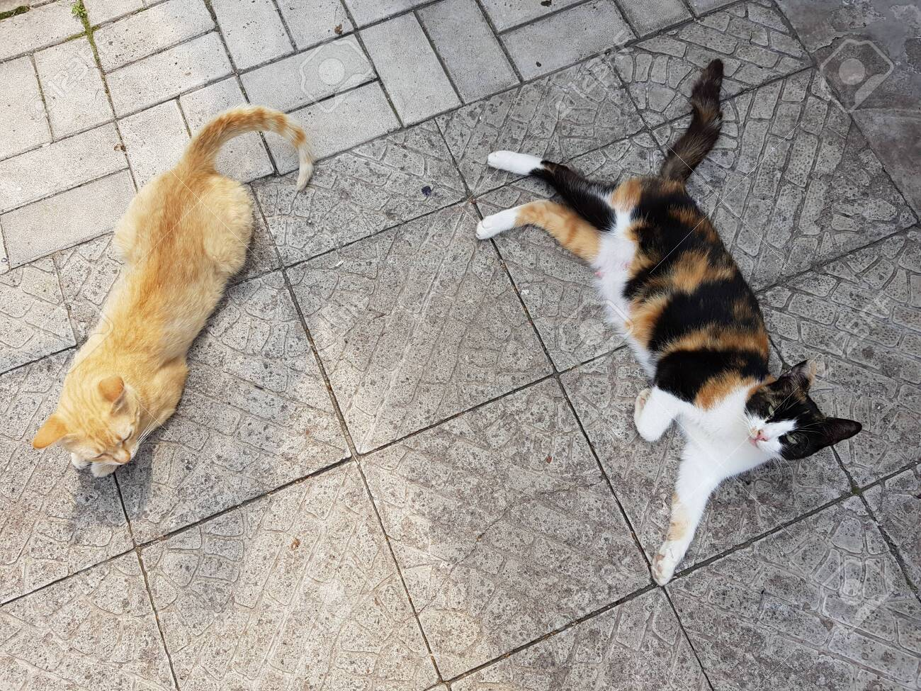 two cats lie on a stone tile floor view from above summer rest