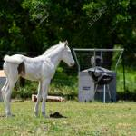 Profile Of An Adorable Snow White Albino Baby Horse Swishing Stock Photo Picture And Royalty Free Image Image 146581927