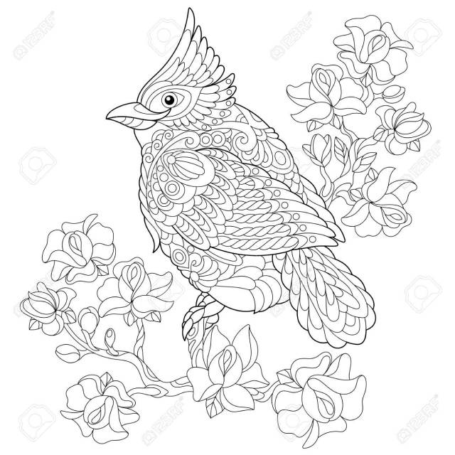 Coloring Book Page Of Northern Red Cardinal Bird Sitting On Cherry