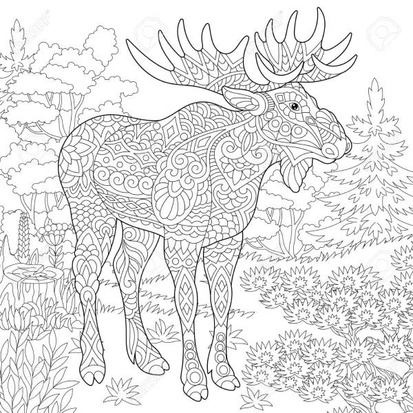 moose coloring page # 13