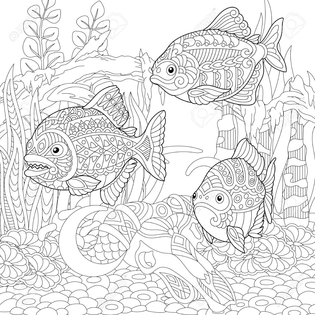 Piranhas South American Freshwater Predatory Fishes Coloring Royalty Free Cliparts Vectors And Stock Illustration Image 103013286