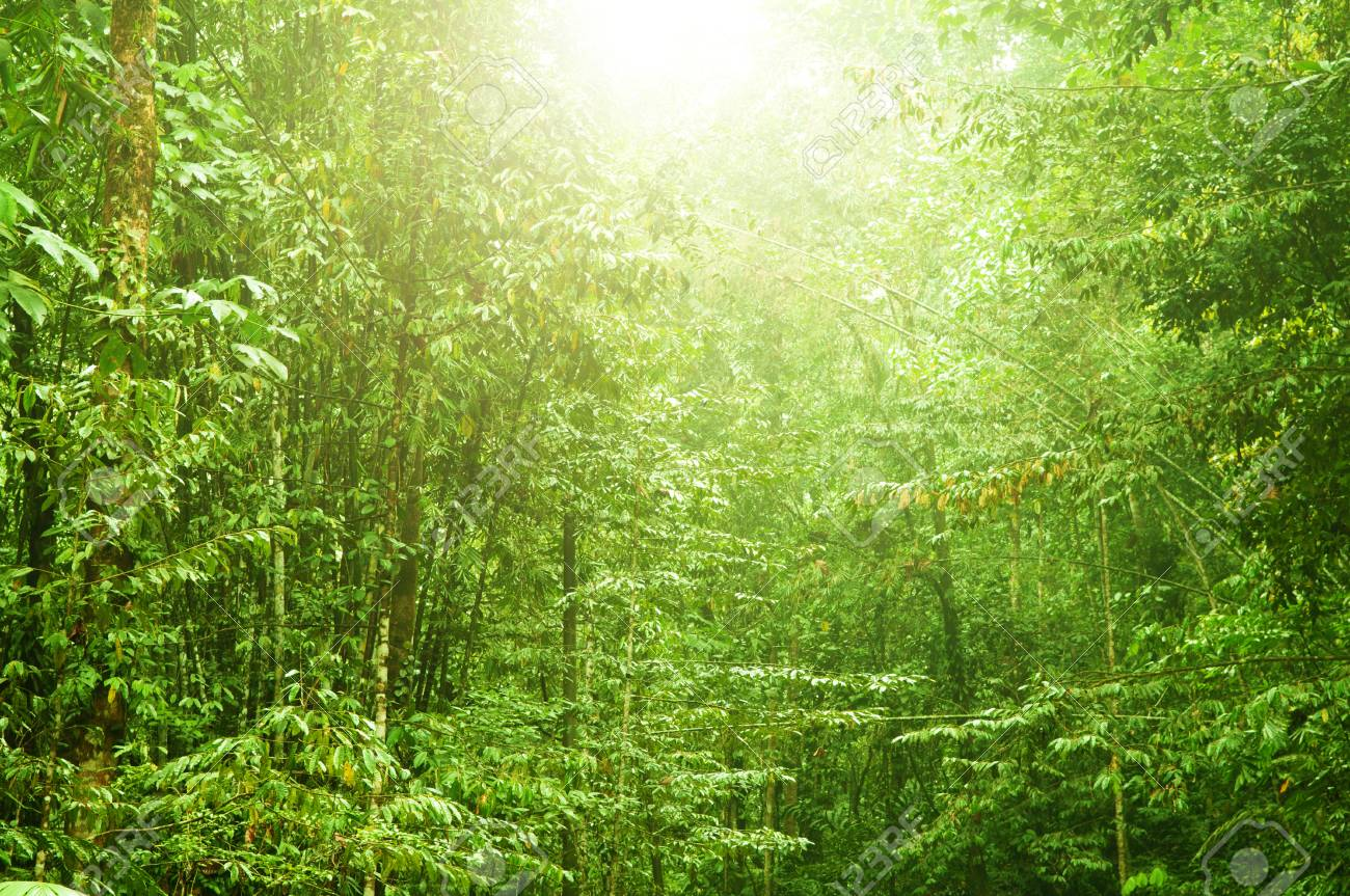 Find the perfect dense forest stock photo. Incredible Tropical Dense Forest Landscape With Sun Flare In Morning Stock Photo Picture And Royalty Free Image Image 79808855