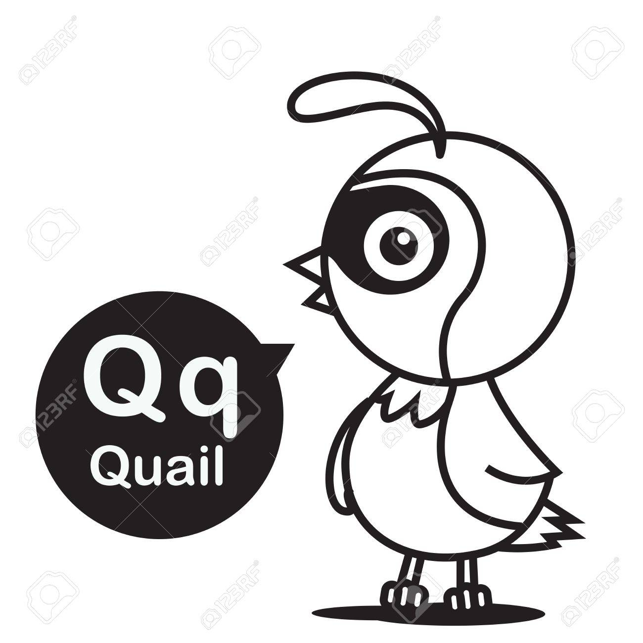 Q Quail Animal Cartoon And Alphabet For Children To Learning