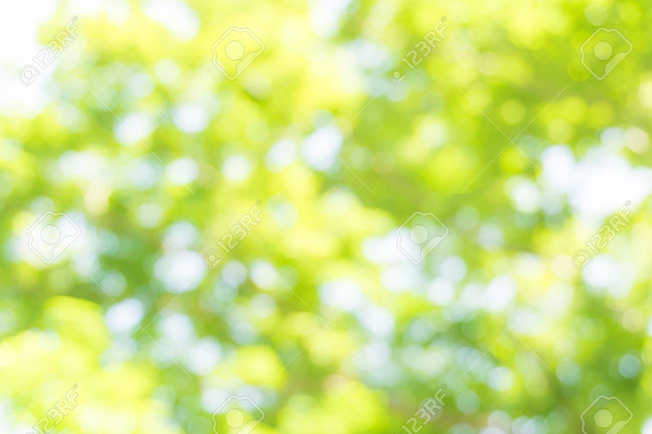 Green And Light Green Blur Background Of Tree Stock Photo Picture And Royalty Free Image Image 64165554