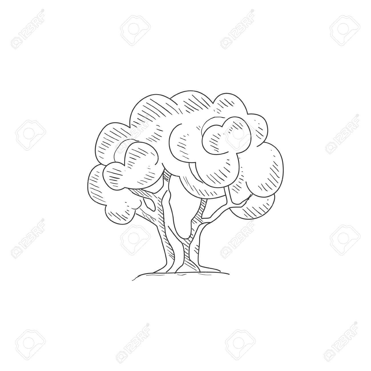 Olive Tree Hand Drawn Realistic Detailed Sketch In Classy Simple Royalty Free Cliparts Vectors And Stock Illustration Image 61245939