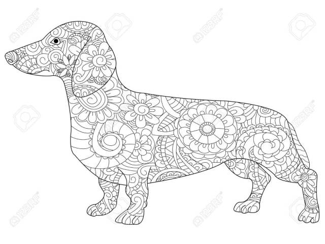 Dachshund Coloring Book For Adults Raster Stock Photo, Picture And