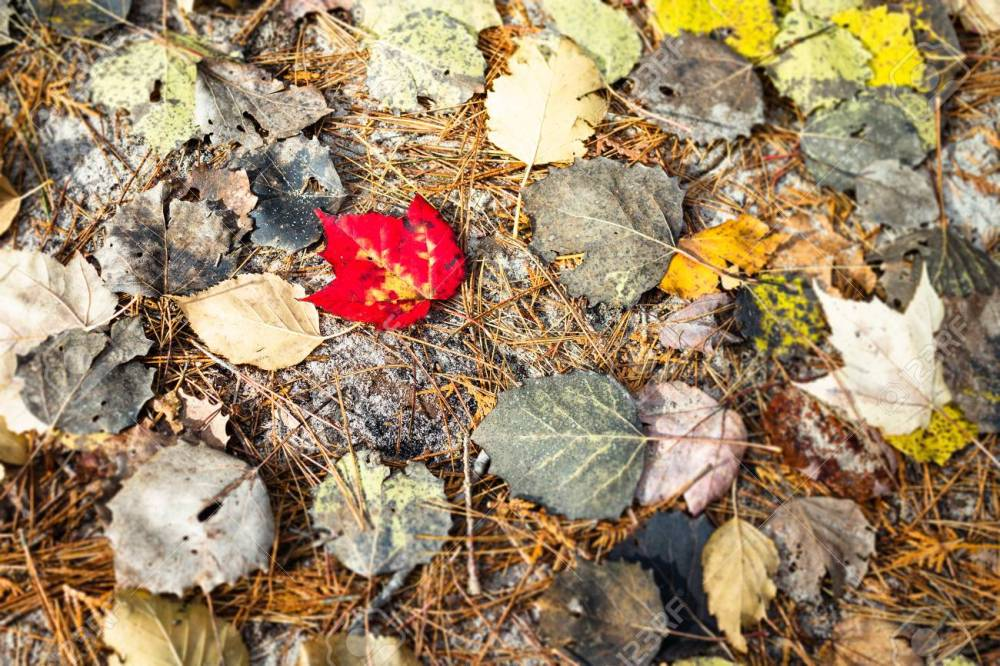 Fall Leaves HD For Earthy Crisp And Beautiful Background Wallpaper. Stock  Photo, Picture And Royalty Free Image. Image 114563520.