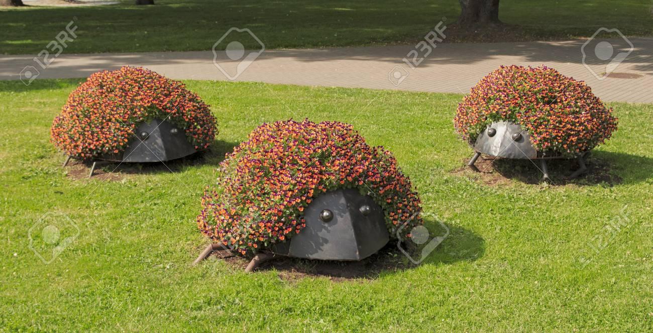 lit de fleurs en forme de herisson idees pour les parterres de fleurs