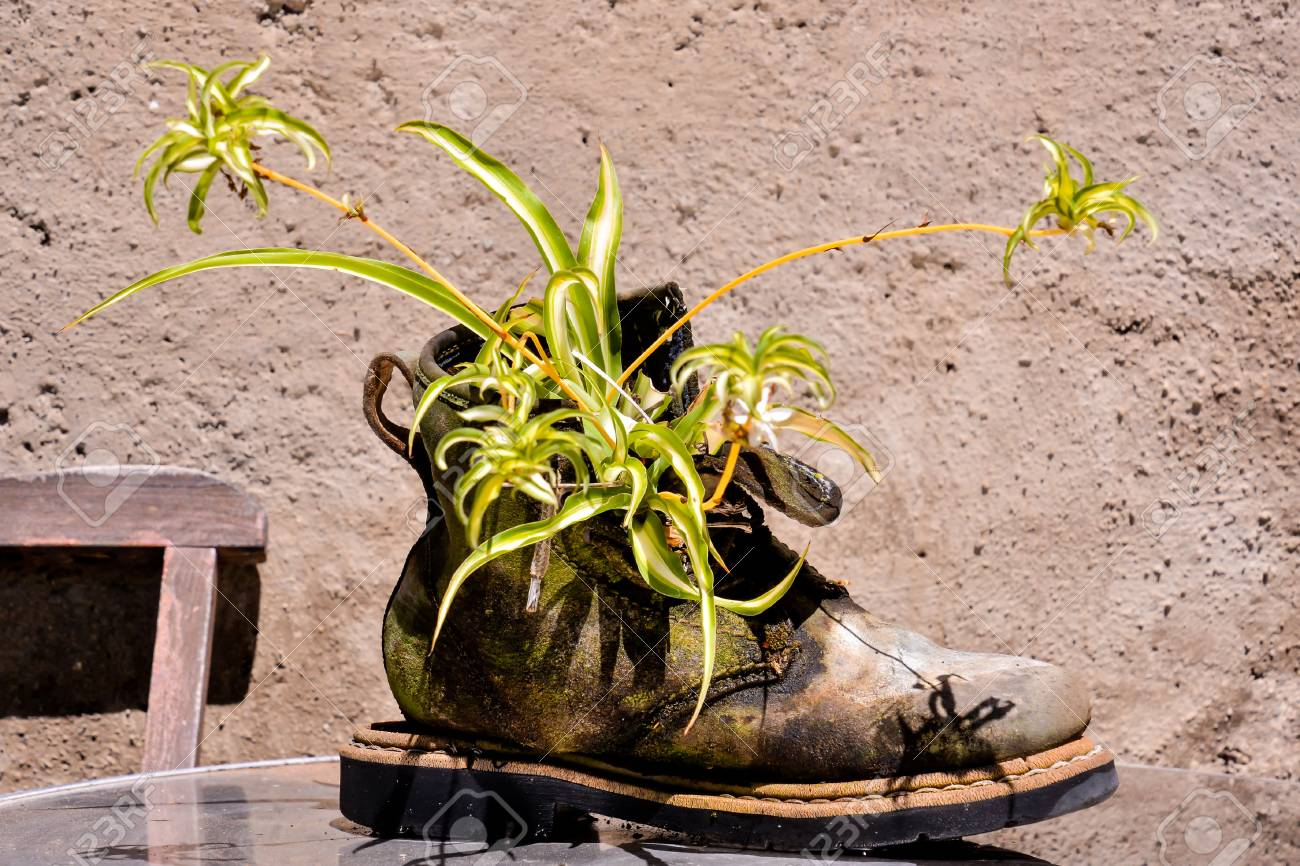 Photo Picture Of A Strange Unusual Plant Pot Stock Photo Picture And Royalty Free Image Image 69505296