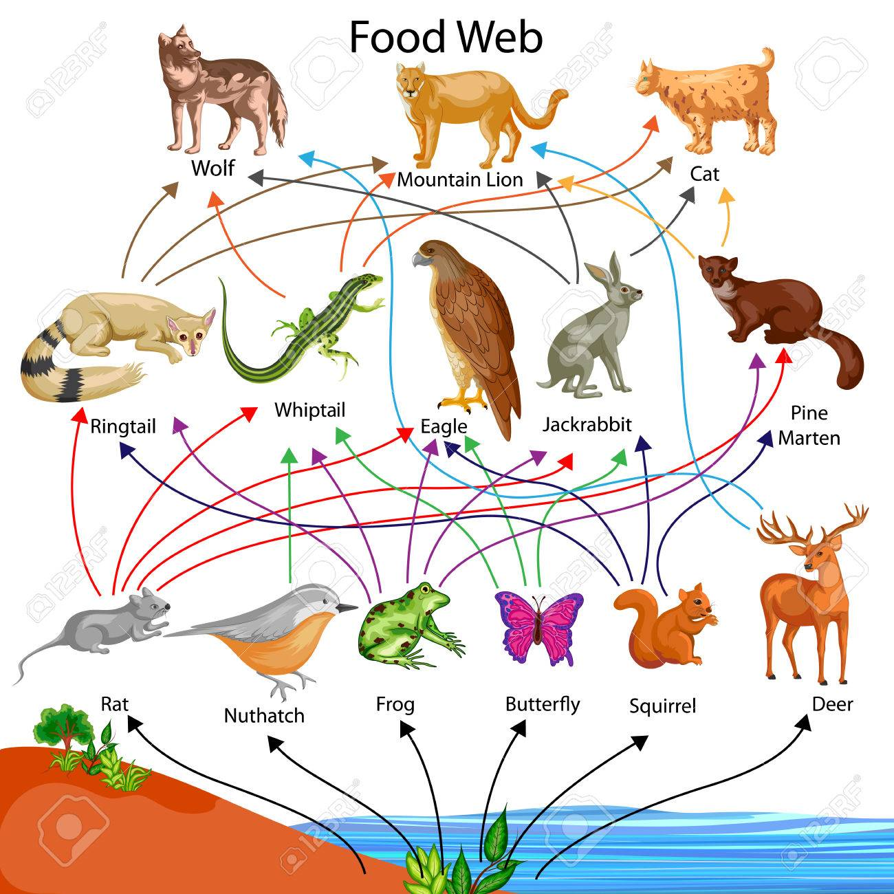 Ecosystem Food Chain Examples Diagram Free Image About Wiring And Schematic Desert Biome Schematics Diagrams 1060x1060