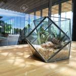 Cacti In An Industrial Glass Hexagon Cactus Terrarium Planter Stock Photo Picture And Royalty Free Image Image 105467566