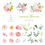 Ranunculus Rose Peony Dahlia Camellia Carnation Orchid Royalty Free Cliparts Vectors And Stock Illustration Image 62257374
