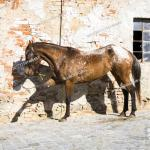 The Appaloosa A Horse Breed Best Known For Its Colorful Leopard Spotted Coat Pattern Stock Photo Picture And Rights Managed Image Pic Ckp F201711191486601 Agefotostock