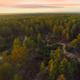 Pines Sunset