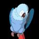 Blue Parrot Cleans Feathers