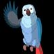 Blue Parrot Greets