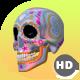 HD Sugar Candy Skulls - 12 Clips + 6 Transitions