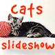 Cats Slideshow