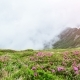 Magic Pink Rhododendron Flowers on Summer Mountain. Low Clouds and Fog.