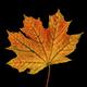 Autumn Leaf Fall Pack
