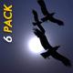 Raven Flock - Transition - Pack of 6
