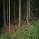 Looking Into The Dark Woods