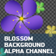 Blossom Background With Alpha Channel