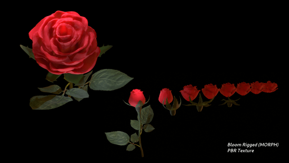 Realistic 3D Rose Flower with Blooming Rig
