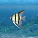 Aquarium Fish Revealer