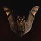 Halloween Bat Logo
